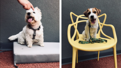 Dyzajn-bez-nazvanyya-2-414x233 В рамках Міжнародної акції #TakeYourDogToWorkDay у компанії JustCoded провели Dog day 2021