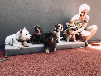 JC-dog-day2-414x311 В рамках Міжнародної акції #TakeYourDogToWorkDay у компанії JustCoded провели Dog day 2021